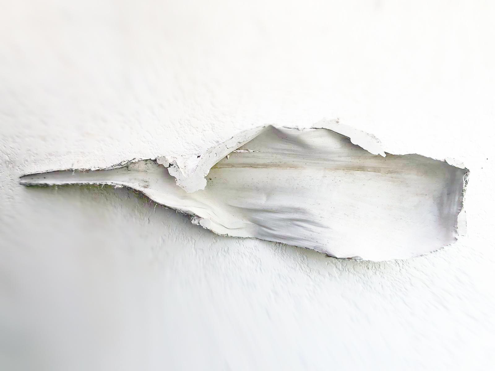 André Kruysen. Folha. Gesso e arame 67 x 270 x 25 cm 2019